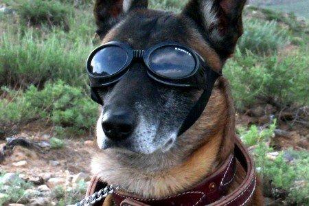 Brýle pro psa