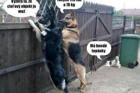 Psi, kteří vás ochrání