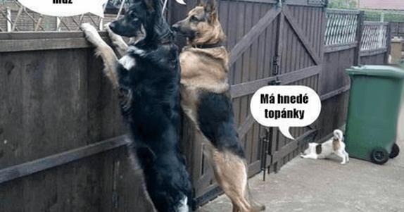 reddit polština psí styl