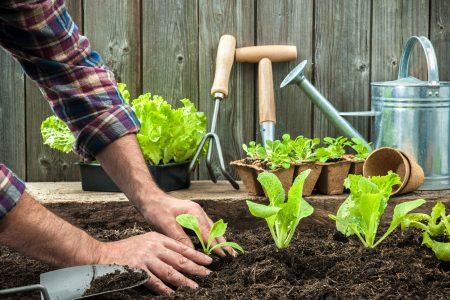 priprava zahrady na jaro