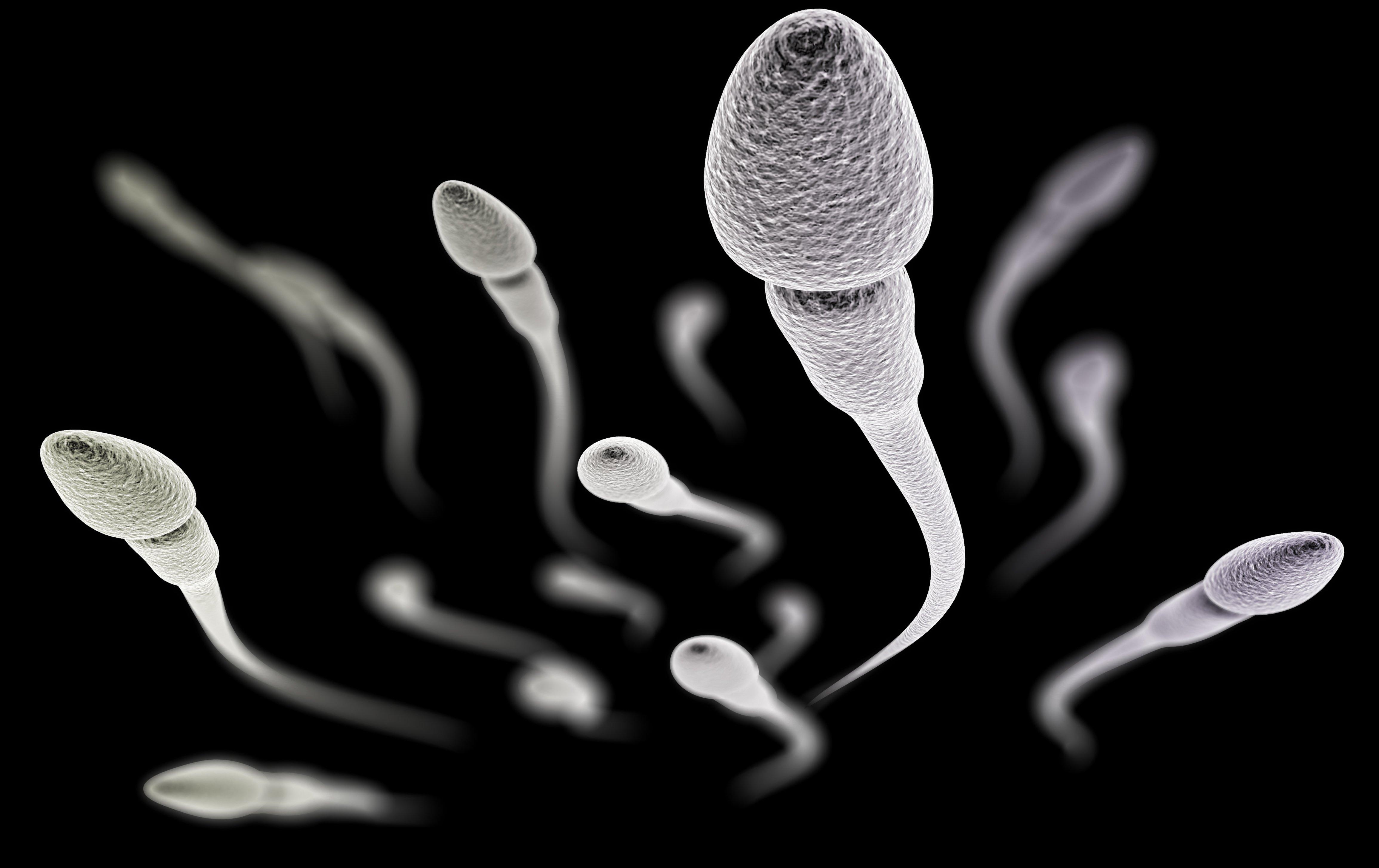 spermie