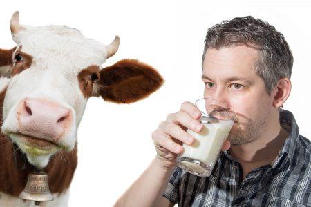 Krávy v Rotterdamu