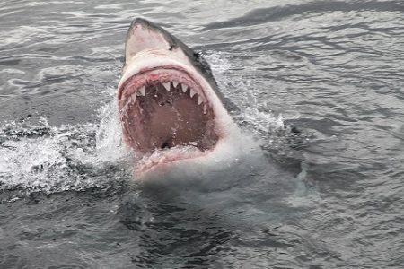 Žralok a útok na člověka. Měli bychom se u moře bát nebo nic nehrozí