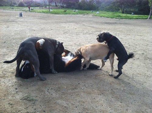 Pes a všechny důvody, proč si ho nepořídit. Musíte to přítelkyni rozmluvit