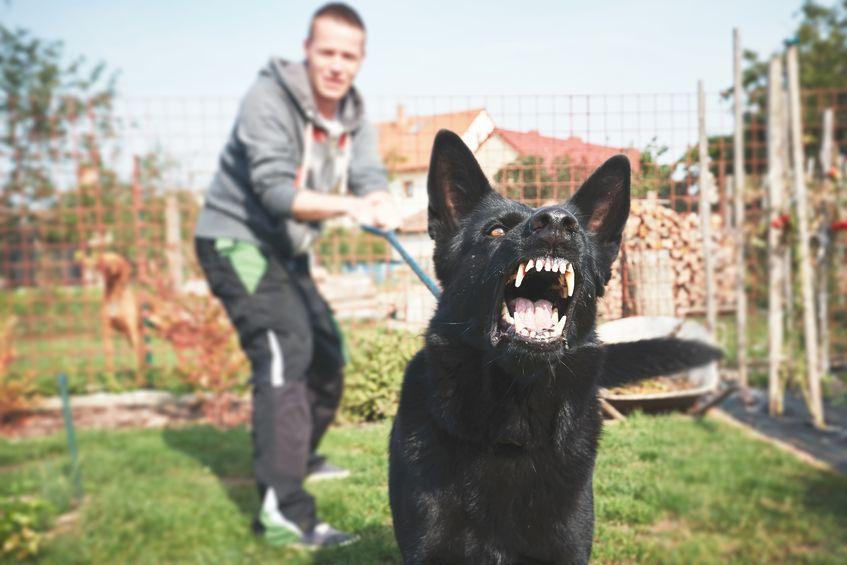 Chcete chránit svůj majetek? S tím vám pomůže ten nejlepší hlídací pes!